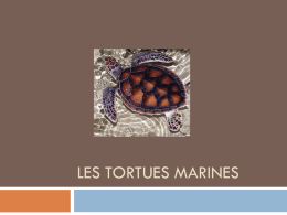 les_tortues_marines