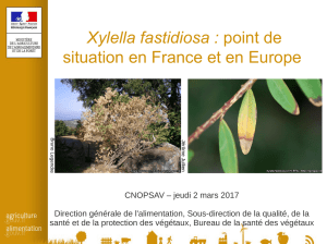 Xylella fastidiosa : point de situation en France et