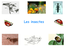 cours Entomologie licence pro 2014