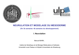 NEURULATION ET MODELAGE DU MESODERME