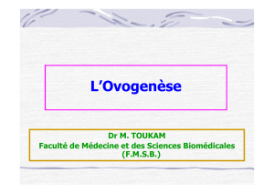 Formation de l`ovocyte II