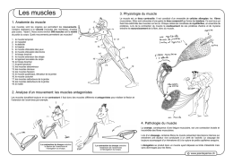 Muscles_files/Muscles Duperrex