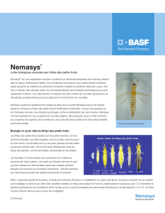 Nemasys - Plant Products