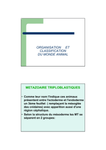 organisation et classification du monde animal - FSA