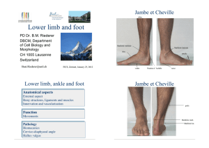 Lower limb and foot