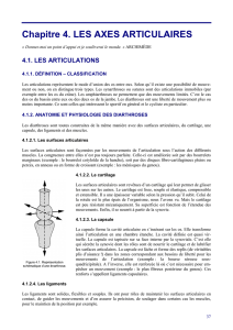 Les axes articulaires