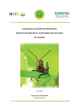 CATALOGUE ILLUSTRÉ DES PRINCIPAUX INSECTES