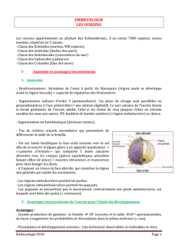 embryologie les oursins