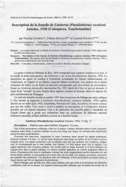 Description de la femelle de Litoborus (Paralitoborus) escalerai