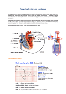Rappels physiologie cardiaque