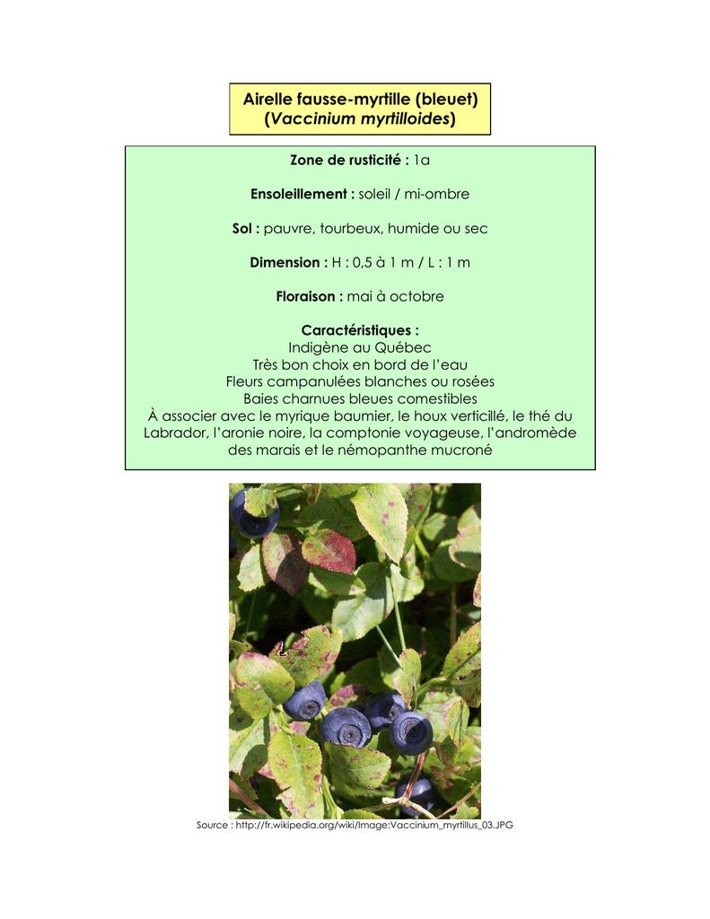 Arbuste Terrain Sec Ombre liste de végétaux pour végétaliser les bandes riveraines