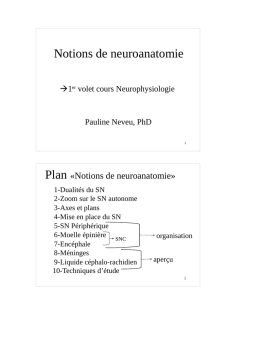 Notions de neuroanatomie