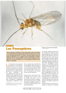 Les Psocoptères / Insectes n° 149