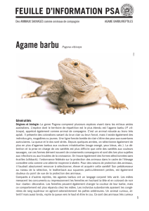 Agame barbu - Protection suisse des animaux
