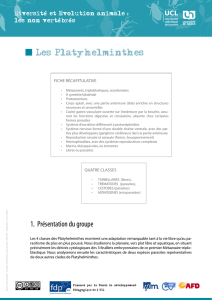 Les Platyhelminthes