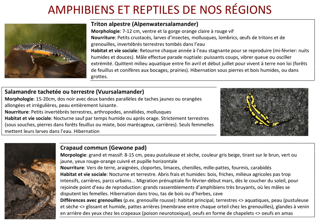 AMPHIBIENS ET REPTILES DE NOS RÉGIONS