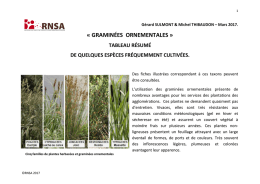 Guide graminées ornementales
