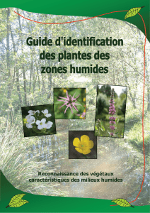 Guide identification des plantes des zones humides