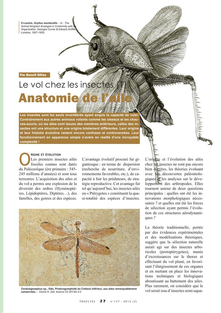 Le vol chez les insectes : anatomie de l`aile / Insectes n° 177