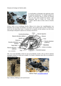 document sur la mytiliculture
