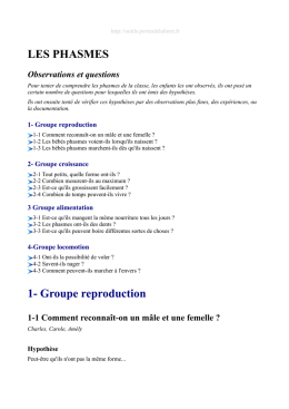 LES PHASMES 1- Groupe reproduction