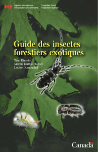 Guide des insectes forestiers exotiques