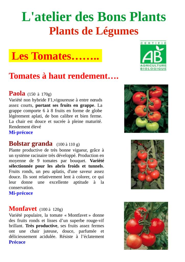 50 Graines-saine /& Vitamine riches fruits Géant mûres-Env
