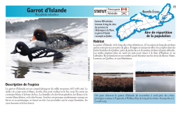 Garrot d`Islande - Species at Risk