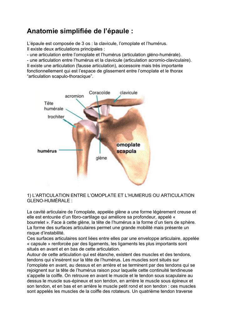 Anatomie simplifiée de l`épaule