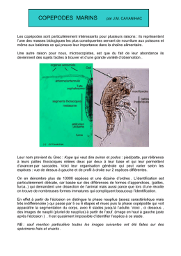 Copepodes marins