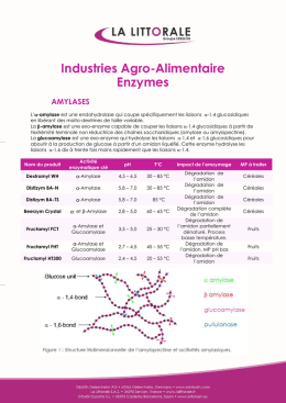 Industries Agro-Alimentaire Enzymes