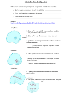 Mitosis : The Onion Root Tip Activity