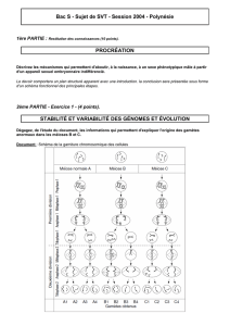 Bac S - Sujet de SVT - Session 2004