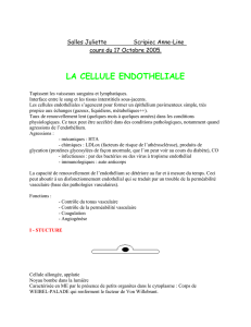 Cellule Endothéliale : 17 Oct