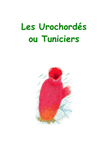 Les Urochords