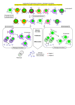 Lymphocytes B, plasmocytes et anticorps : phénotypes immunitaires