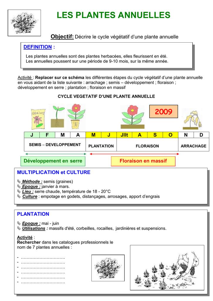 Cycle Vegetatif D Une Plante Annuelle