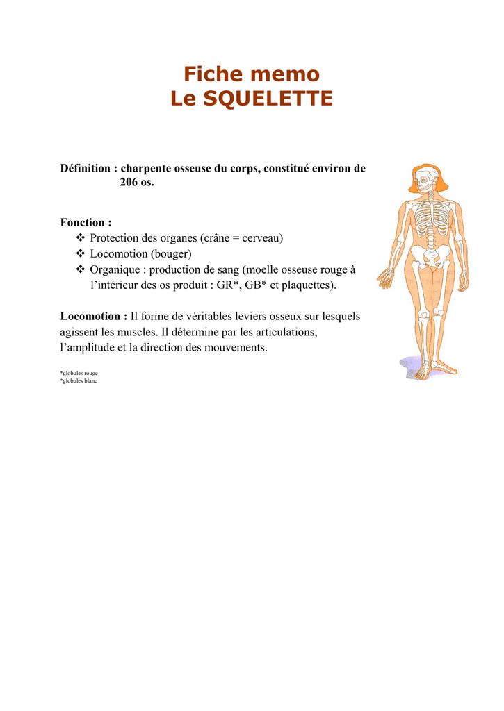 charpente osseuse