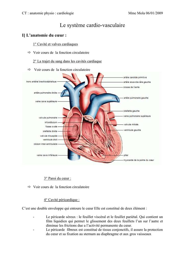 L`appareil cardiovasculaire