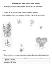 CAPUCIN Cresson faible Tropaeolum Minus Fleur 60 graines quantités remise!!!