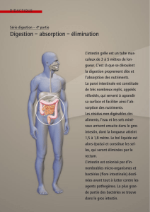 Série digestion, 4e partie: Digestion - absorption