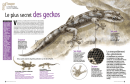 Le plus secret des geckos - Parc national de Port-Cros