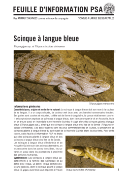 Scinque à langue bleue - Protection suisse des animaux