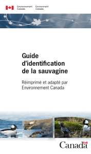 Guide d`identiffcation de la sauvagine