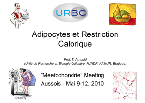 Adipocytes et Restriction Calorique