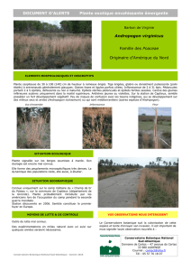 Document d`alerte Andropogon virginicus