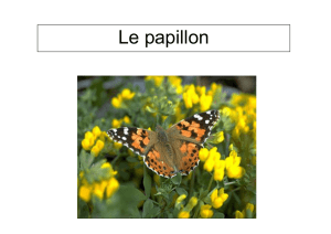 documentaire papillon.pub