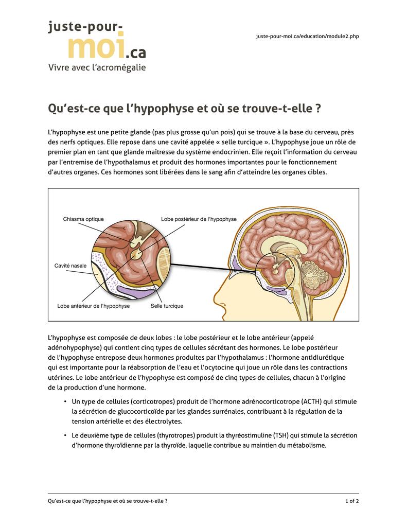 Ausgezeichnet Hormone Der Hypophyse Bilder - Menschliche Anatomie ...