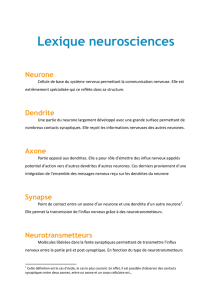 Lexique neurosciences