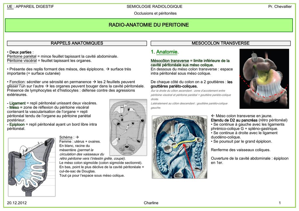 1. Anatomie. RADIO-ANATOMIE DU PERITOINE